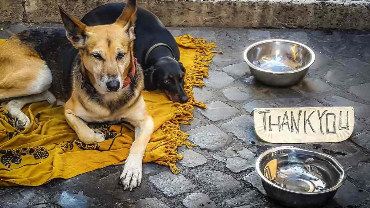 Metaethik - Hunde - Armut - kirkandmimi - pixabay.com -Creative Commons CC0