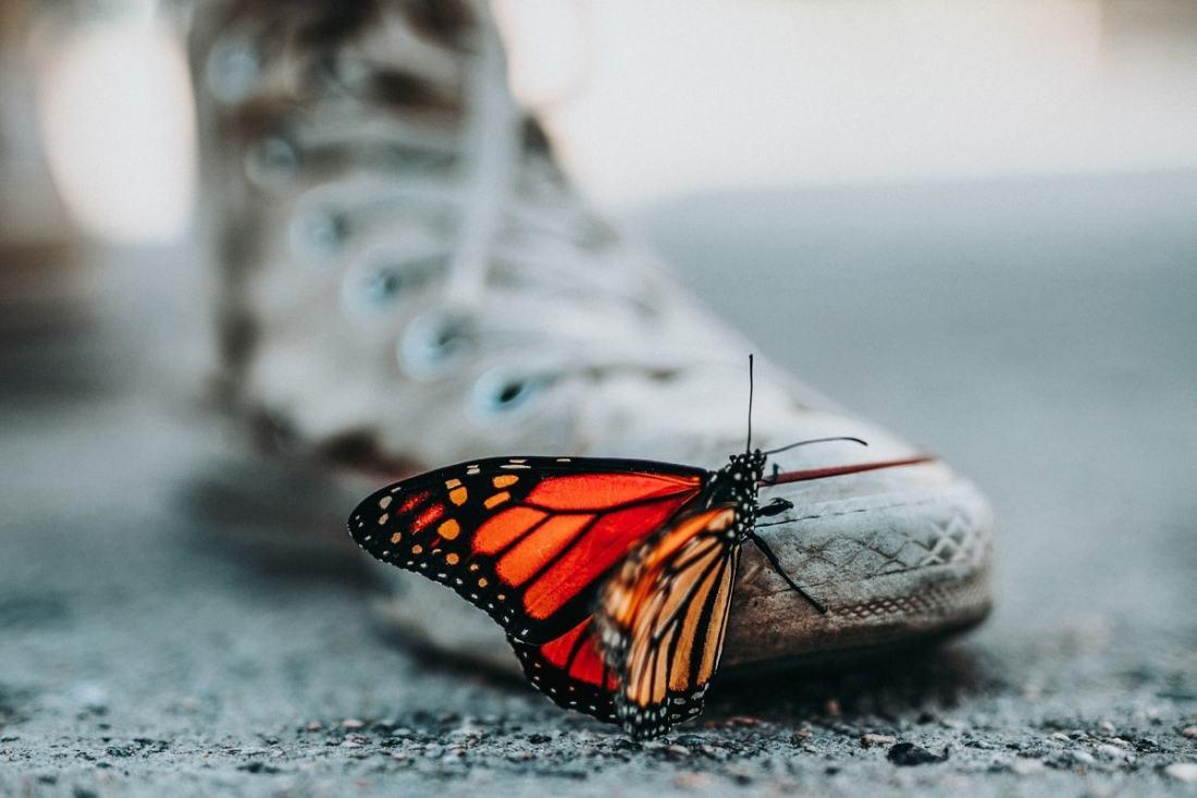 Schmetterling auf einem Schuh. (Foto: Nathan Dumlao; Unsplash.com)