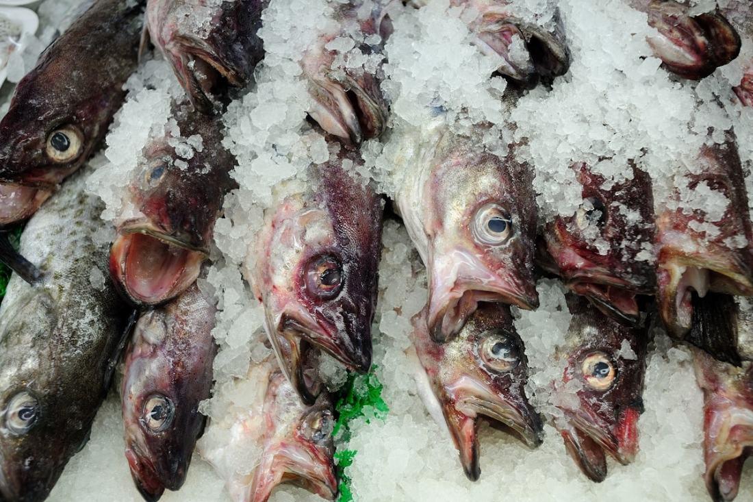 Tote Fische auf Eis. (Foto: Jorge Gonzalez, Unsplash.com)