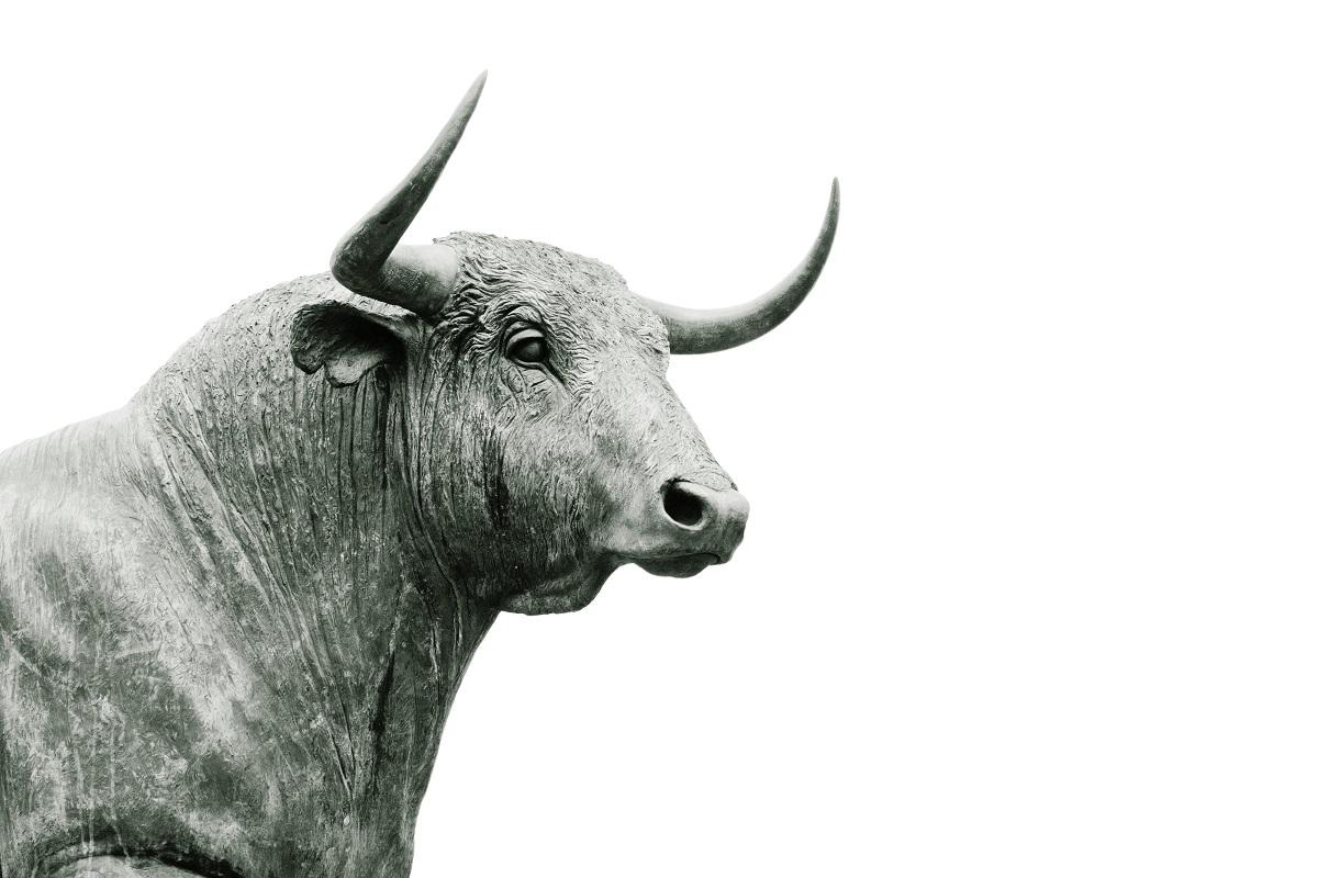 Stier. (Foto: Hans Eiskonen, Unsplash.com)