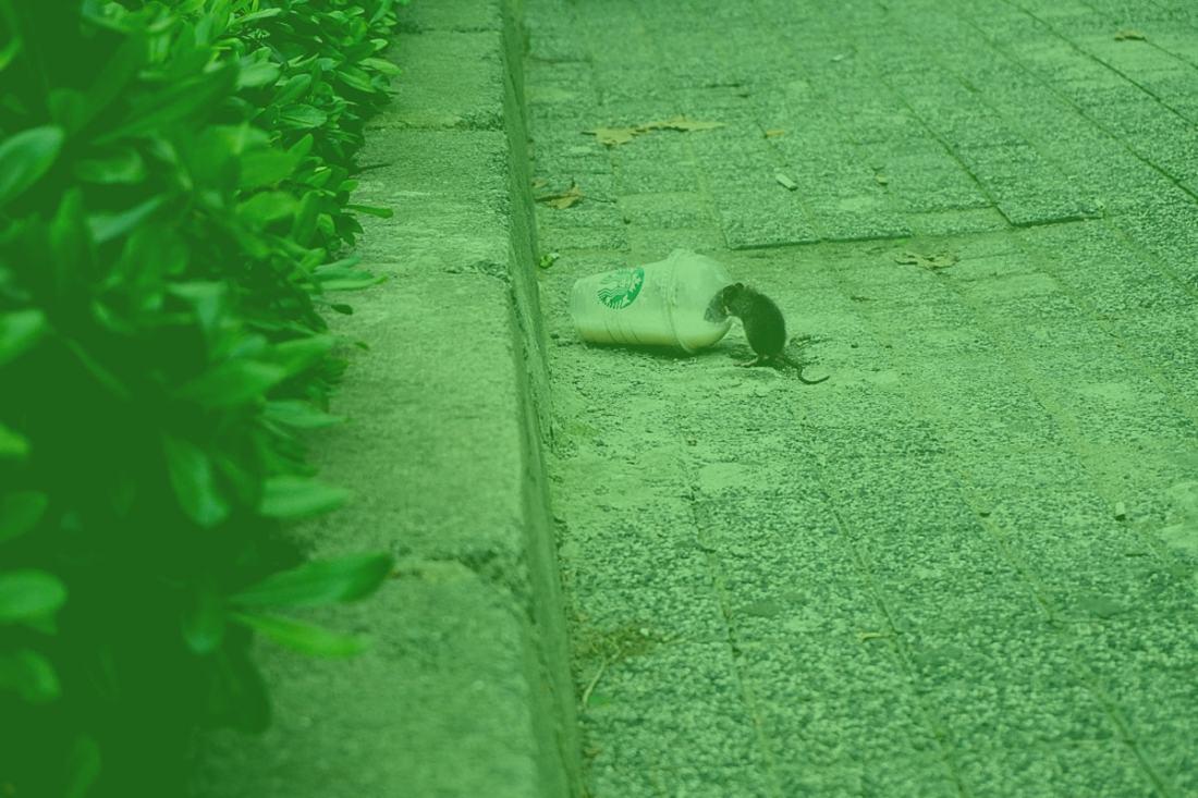 Eine Maus trinkt aus einem Plastikbecher. (Foto: Mert Guller, Unsplash.com)