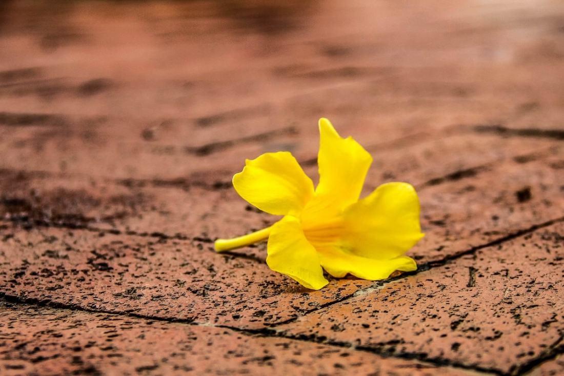 Gelbe Blume auf einem Gehsteig. (Foto: Derek Truninger, Unsplash.com)