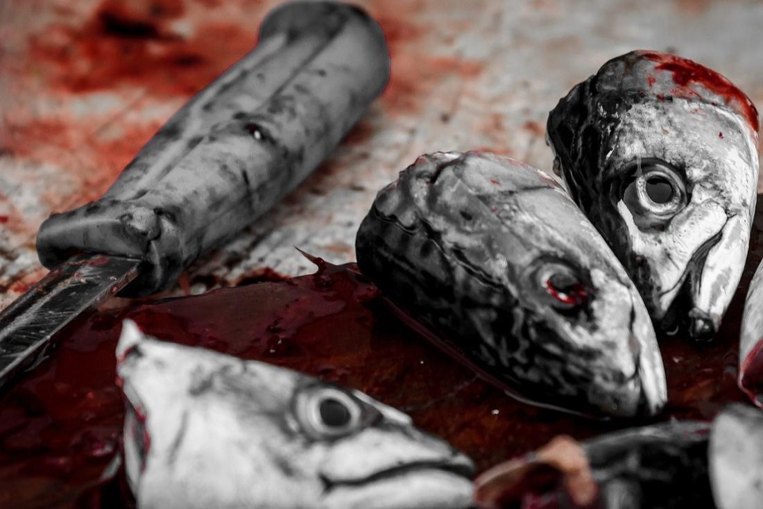 Abgeschnittene Fischköpfe. (Foto: Sorbyphoto, Pixabay.com; Creative Commons CC0)