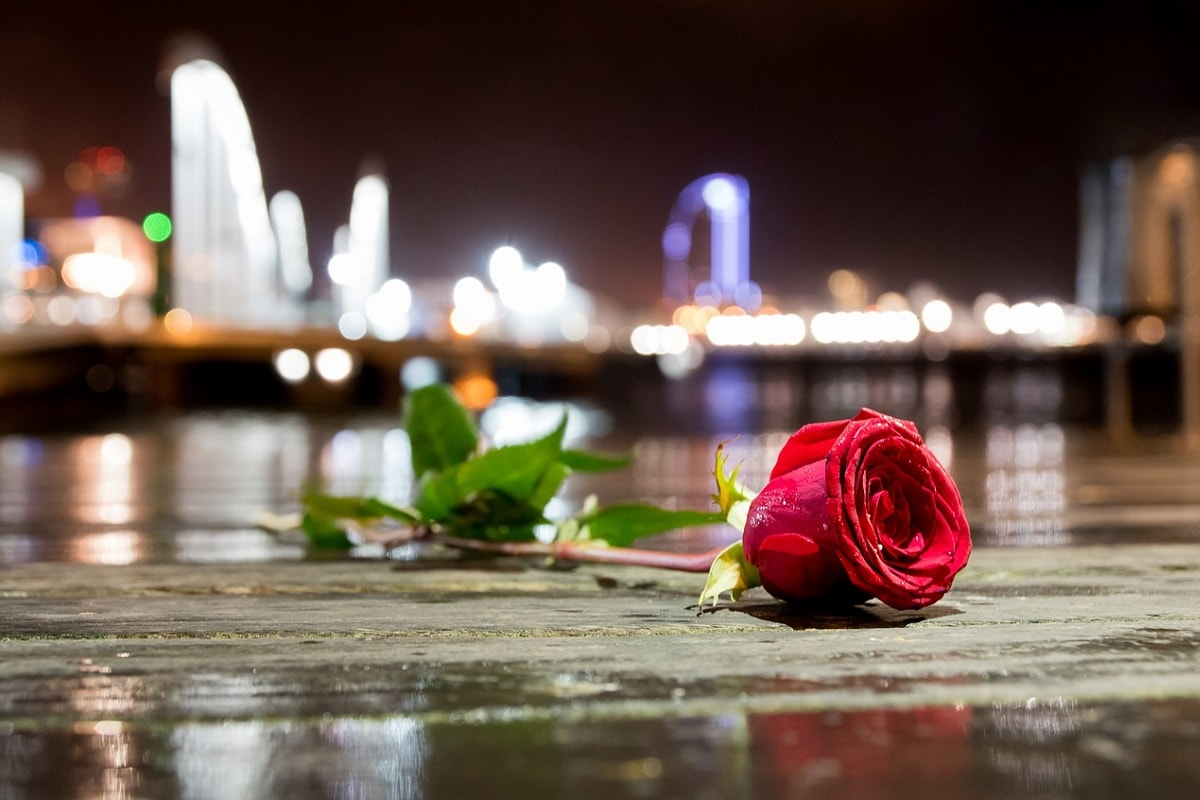Rose auf dem Boden liegend. (Foto: RevivingStars, Pixabay.com, Lizenz: CC0)