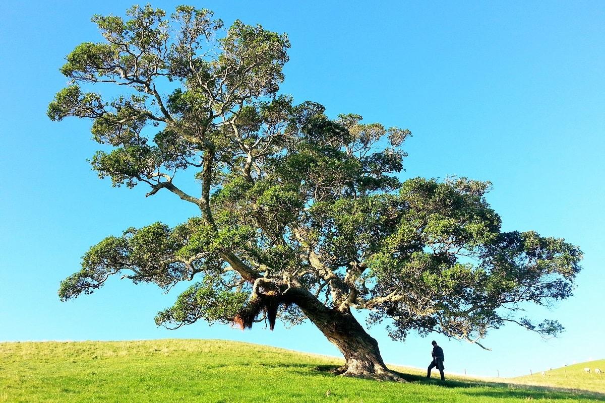 Alter Baum und ein Mann davor. (Foto: Gilly Stewart, Unsplash.com)